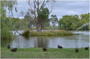 Lake on the grounds of WorldMark South Pacific Club by Wyndham Ballarat