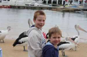 The pelicans at Phillip Island, Victoria | WorldMark South Pacific Club by Wyndham