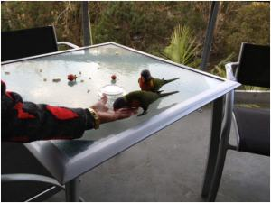 Feeding the lorikeets on balcony in Wyndham Flynns Beach | WorldMark South Pacific Club by Wyndham