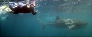 Ningaloo Reef | WorldMark South Pacific Club by Wyndham