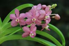 Orchids at the Garden of the Sleeping Giant, Fiji | WorldMark South Pacific Club by Wyndham