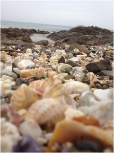 Shelley Beach | WorldMark South Pacific Club by Wyndham