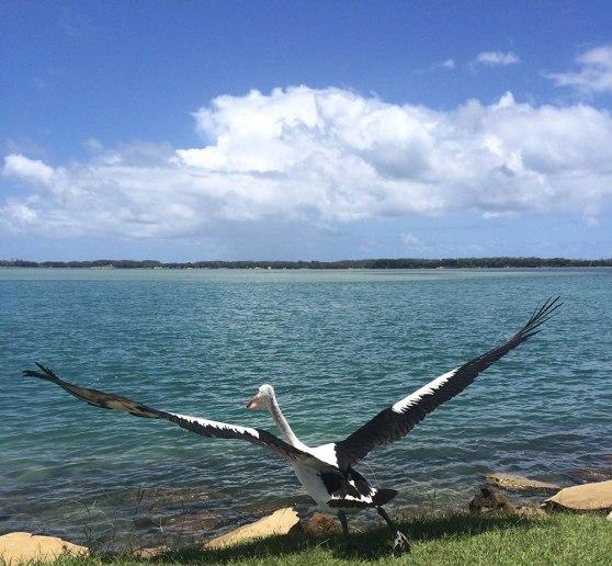 Pelican at Golden Beach, Sunshine Coast - WorldMark South Pacific Club by Wyndham Timeshare