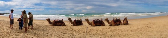 Camel riding at Flynns Beach, Port Macquarie NSW