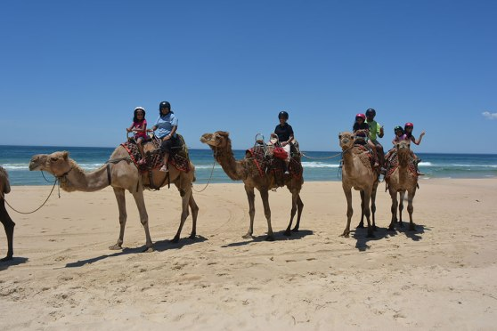 Camel safari at Lighthouse Beach, Port Macquarie