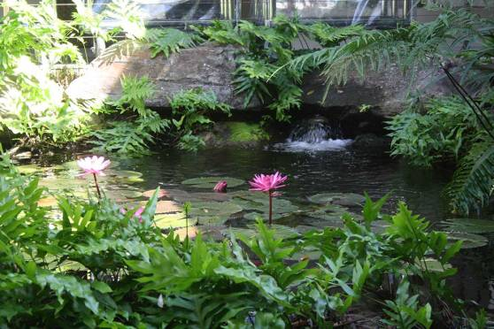 waterfall-and-water-lillies
